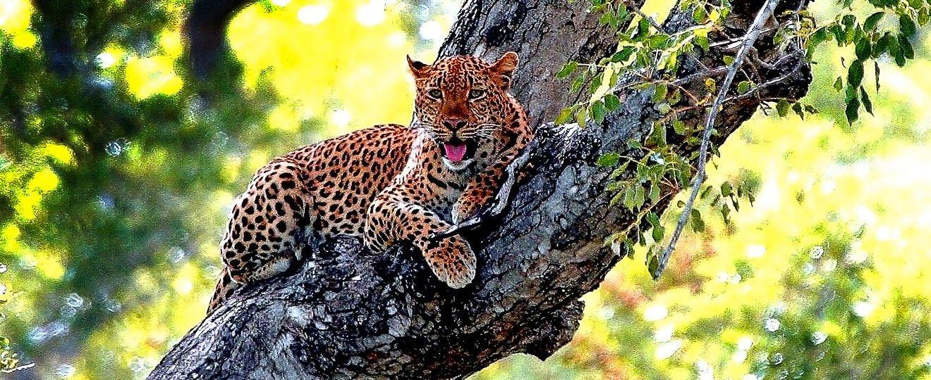 Moremi -  Botswana Namibia Tierbeobachtung