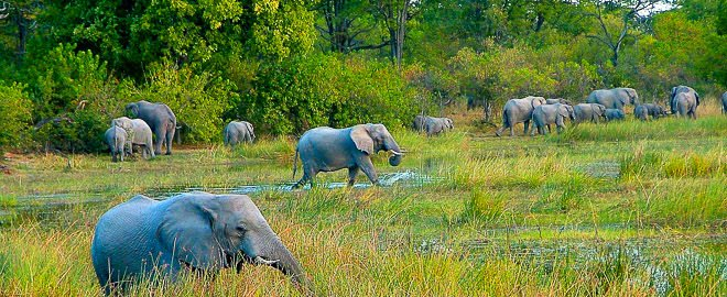 Okavango -  Botswana Namibia Naturreisen Tierbeobachtung
