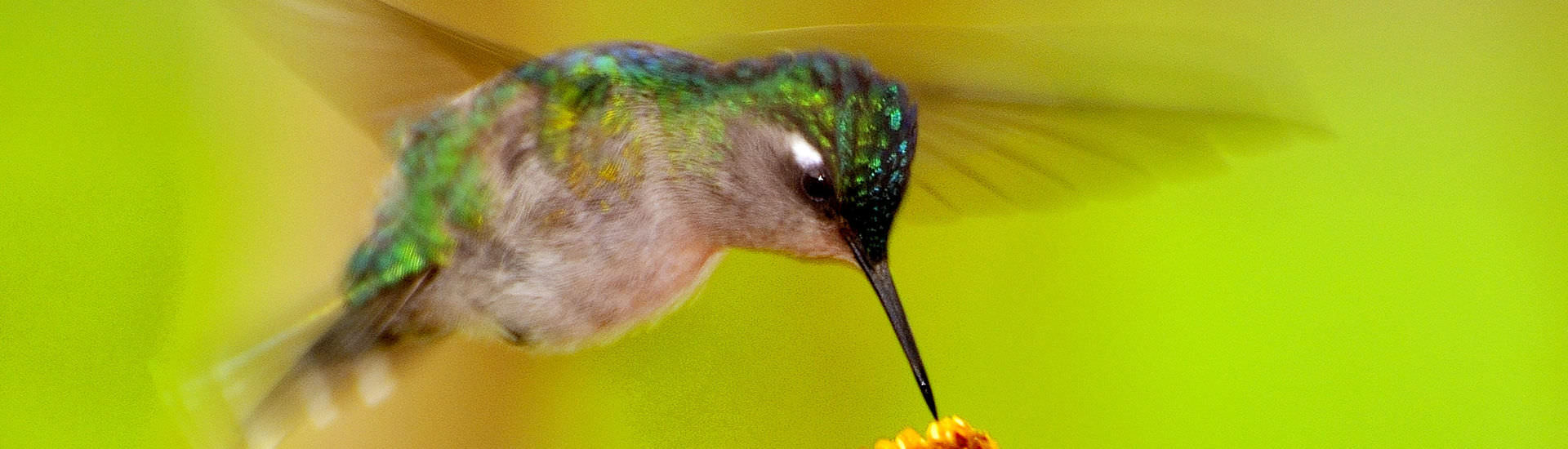 Monteverde -  Costa Rica Naturreisen