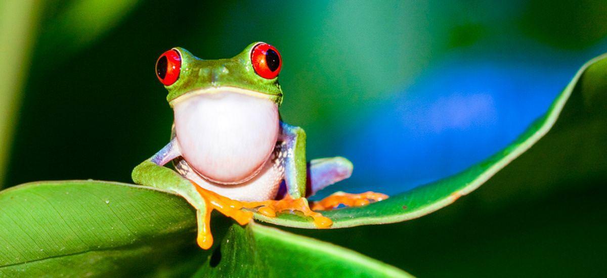 Masaya -  Costa Rica Erlebnisreisen Naturreisen Nicaragua Panama