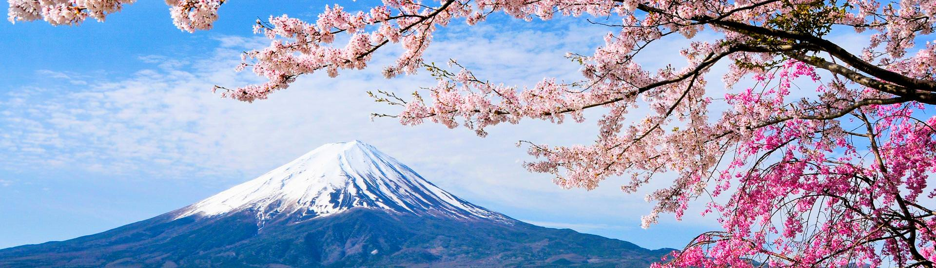 Mount Fuji and Cherry tree (© Goryu, iStockphoto.com / Chamäleon)