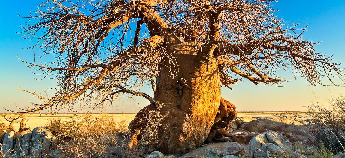 Botswana, Simbabwe und Namibia Okavango Afrika Erlebnis-Reisen