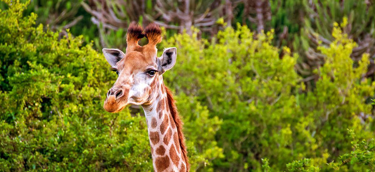 Südafrika, Eswatini und Lesotho Panorama Afrika Erlebnis-Reisen