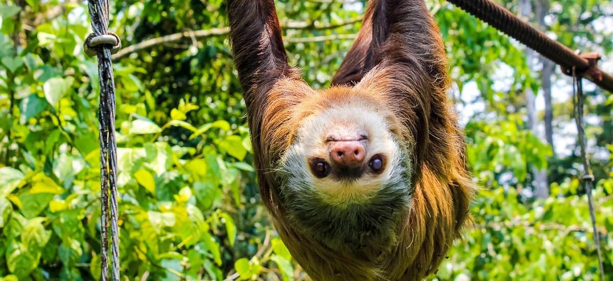 Costa Rica Monteverde Amerika Erlebnis-Reisen
