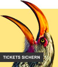Tukan (© Willem Kruger, Greenscreen Festival / Chamäleon)