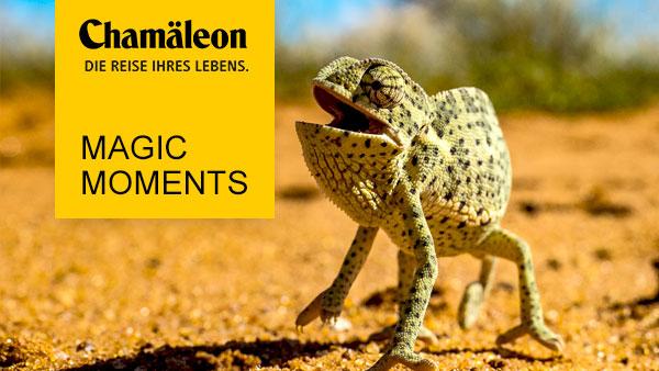 Chamäleon (© Hannes Schleicher / Chamäleon)