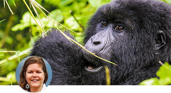 Gorilla (© Jörg Drews / Chamäleon)
